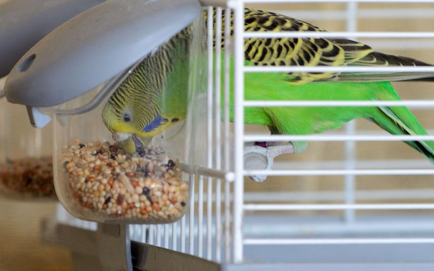 Pokarm dla ptaków